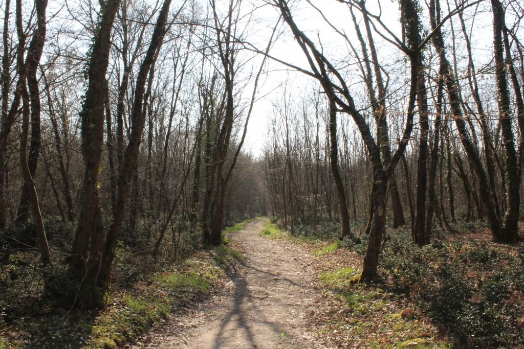 Sentier du Martin Pêcheur dans la forêt de Claix