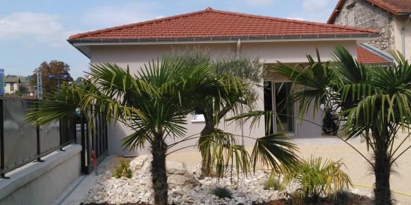 Palmiers et olivier