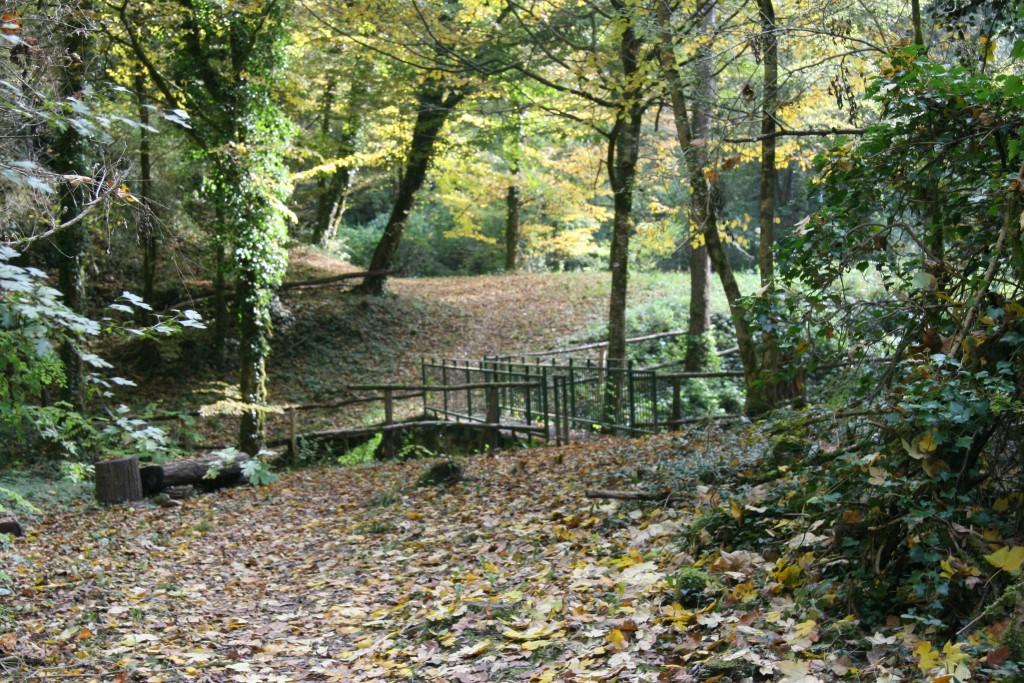le Tarze passerelle en sous bois