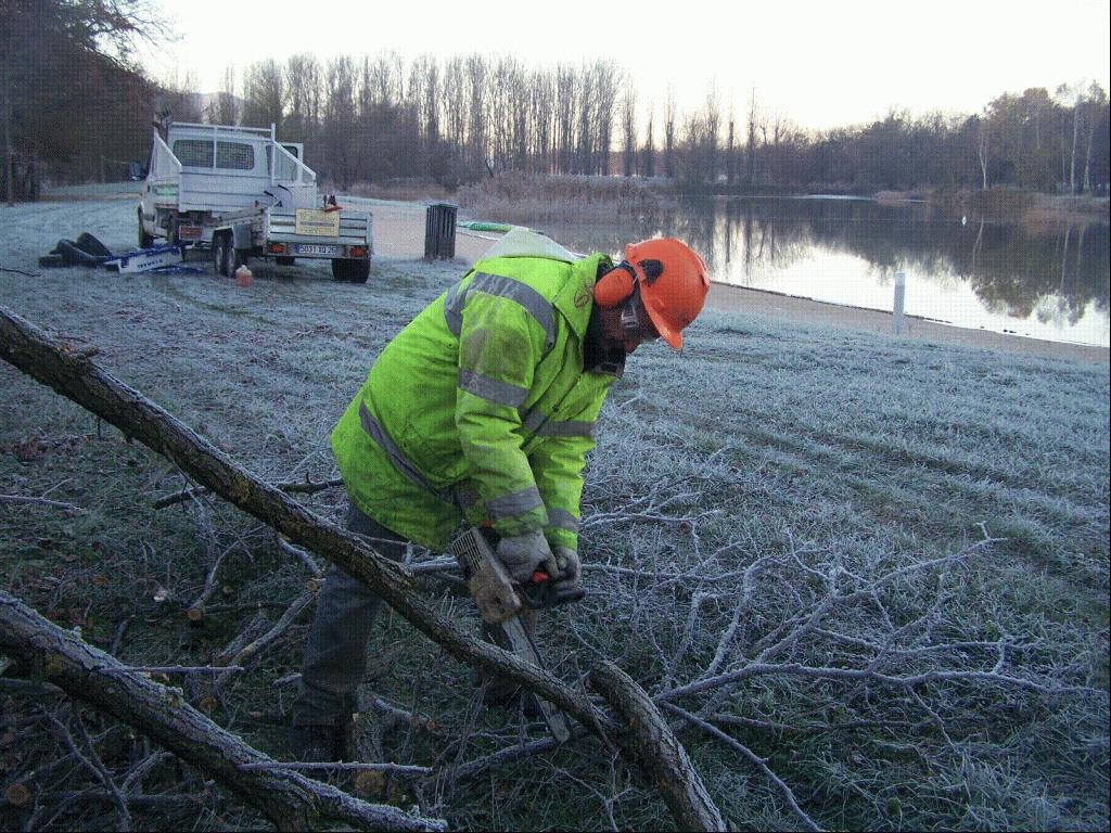 Coupe de vieilles branches